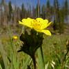 Wildflower - Chaimberlain Airstrip