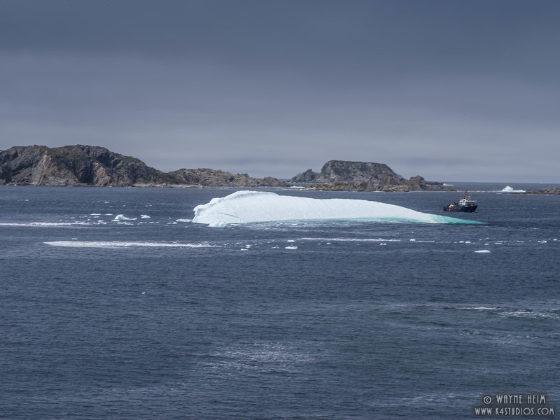 Iceberg  68c       Photography by Wayne Heim