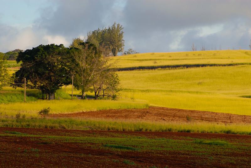 field on the Kaukonahua road