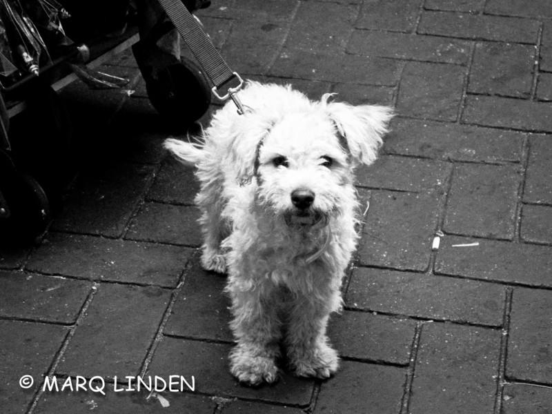 Inner City Dog.jpg