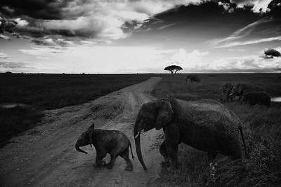 Monochrome  Tanzania