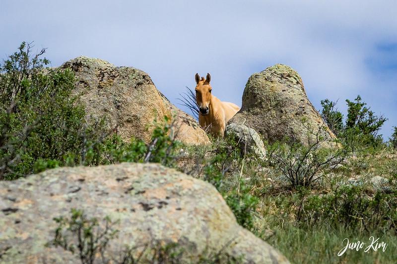 Kustei National Park__6109331-Juno Kim.jpg
