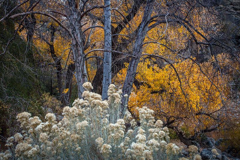 Piru Creek Fall Color Southern California.jpg