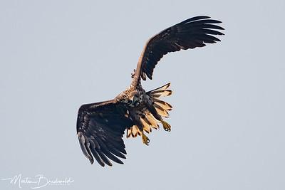 Vogels 2019 (verzamel)