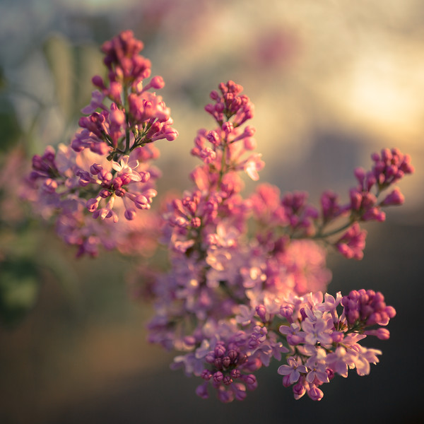 Scent to Delight