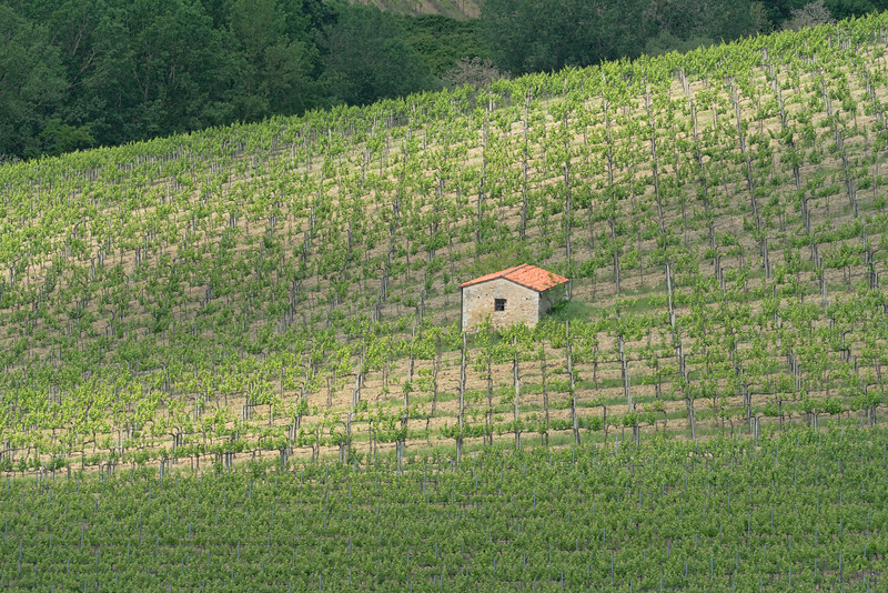 Stone Hut in a Rural Tuscan Vinyard