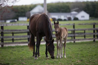 2016-03-31 Shamrock Farm - Ginger Foal