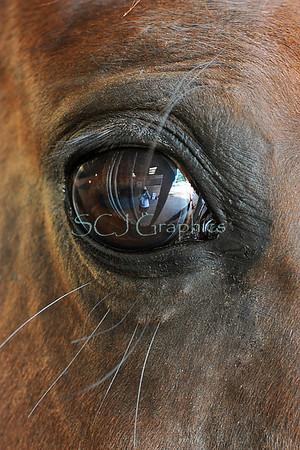 Horses - Miscellaneous Candids