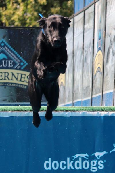 Dock Dogs at Fair-131.JPG