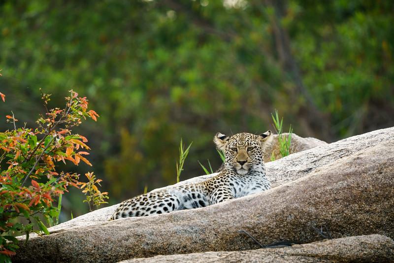 LeopardHills-20171024-1772.jpg