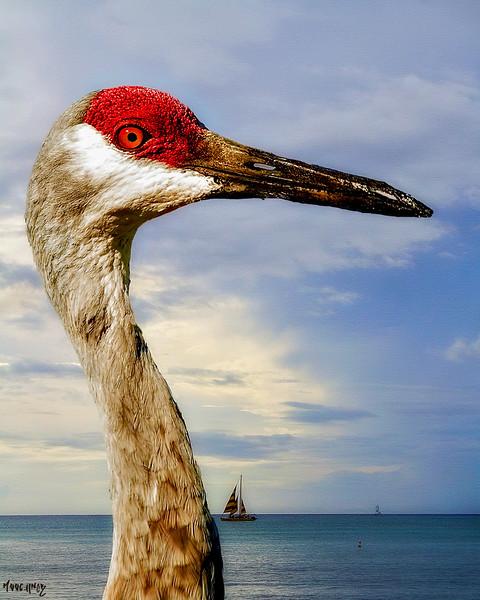 crane202c.jpg
