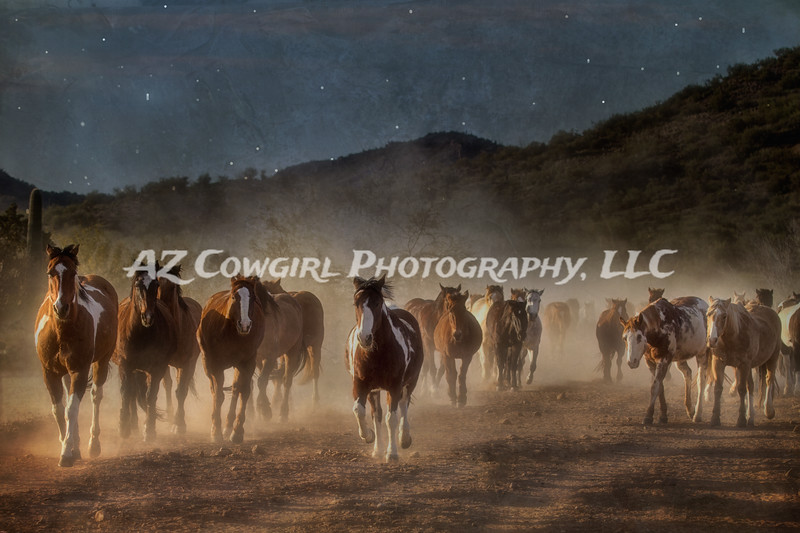 Midnight Herd