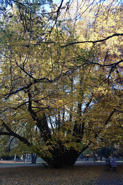 Shot with DxO ONE