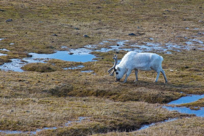Svalbard - High Res-17.jpg