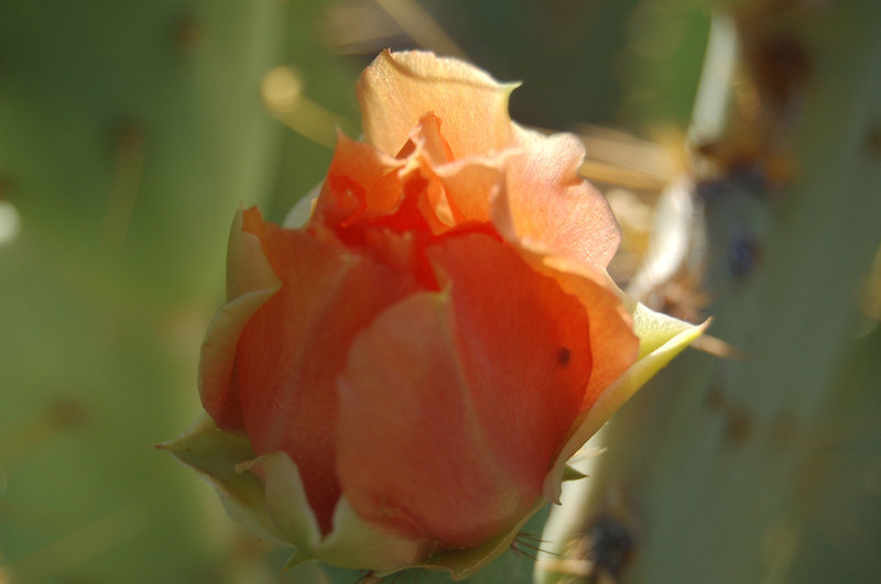 2008 05 02_0040.JPG