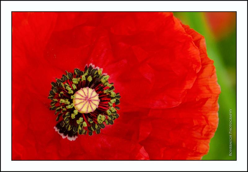 Rohrbaugh Photography Flowers 13.jpg