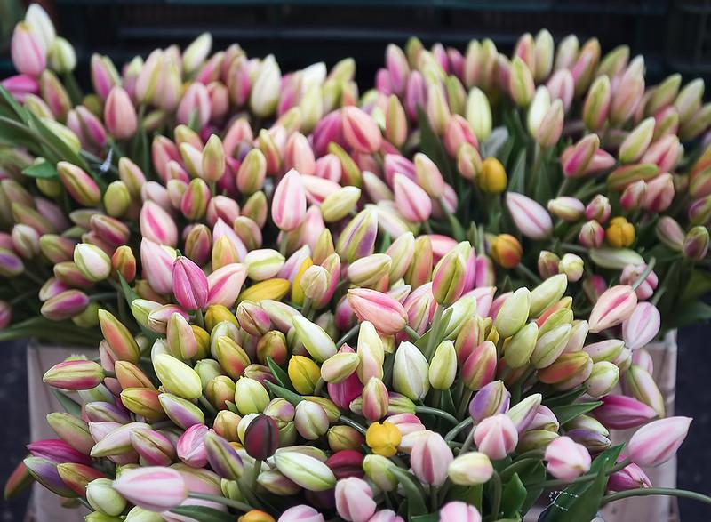 Tulip Bunches.jpg