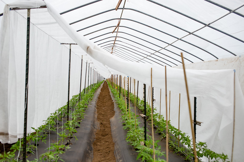 Organic Redneck Farms is one many farms that utilizes the McKenzie River for crop irrigation. On a hot summer day, the greenhouse doors must be opened to prevent burnt crops.