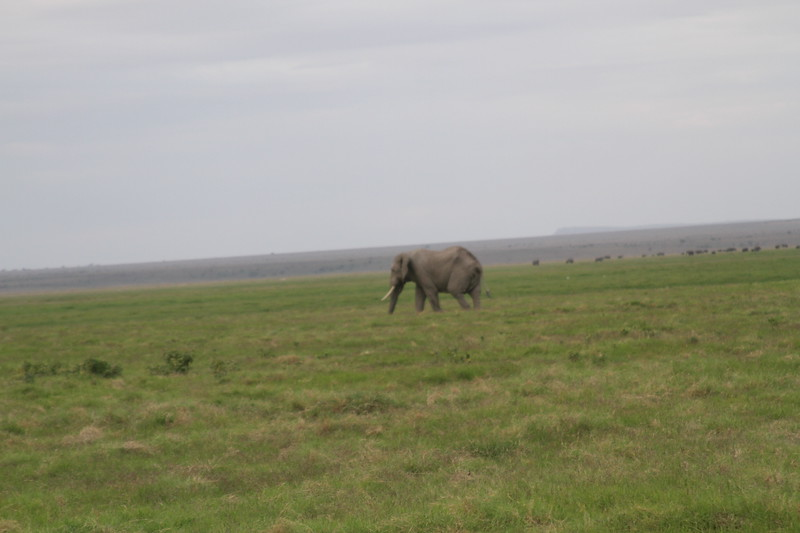 Kenya 2019 #2 1558.JPG