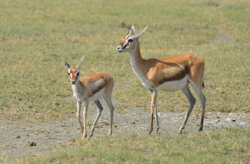 East Africa Safari 416.jpg