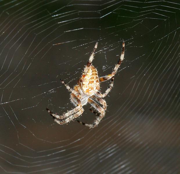 9866 Spider.jpg