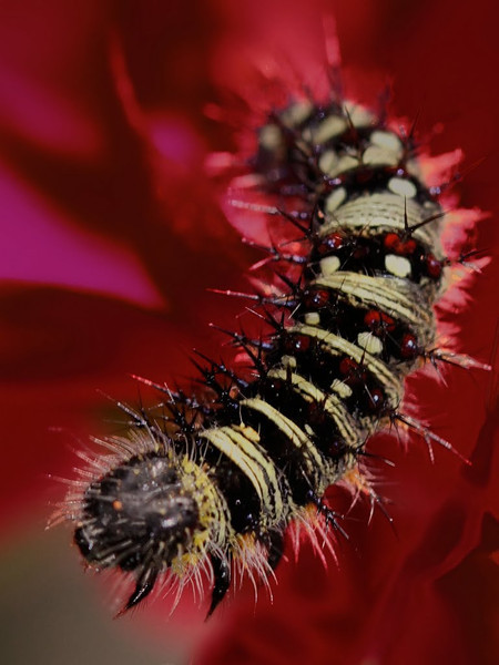 """2012 """"Nature Photography"""" June"""