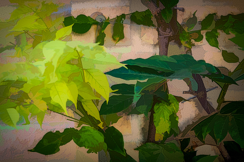 September 30 - Ivy, branches and a brick wall.jpg