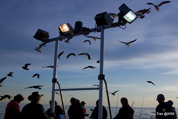 Offshore Sportfishing