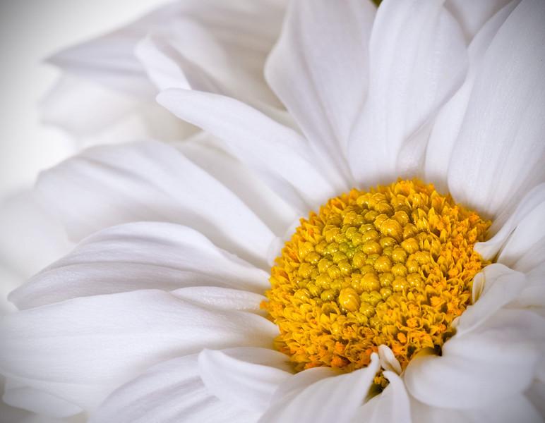 Closeup of flower_5150266433_o_8178992557_o.jpg