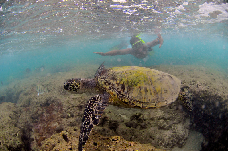 Hawaii - Hanauma Bay-26.JPG