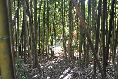 Bamboo & Orange Grove