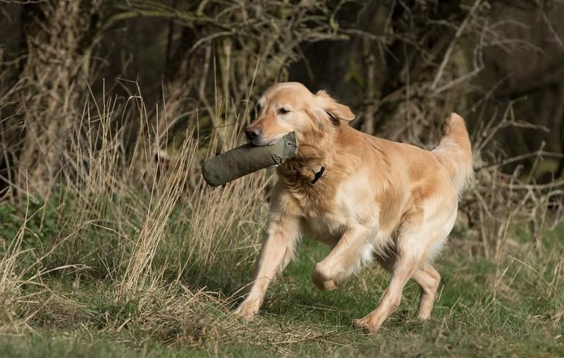 Dogs-5553.jpg
