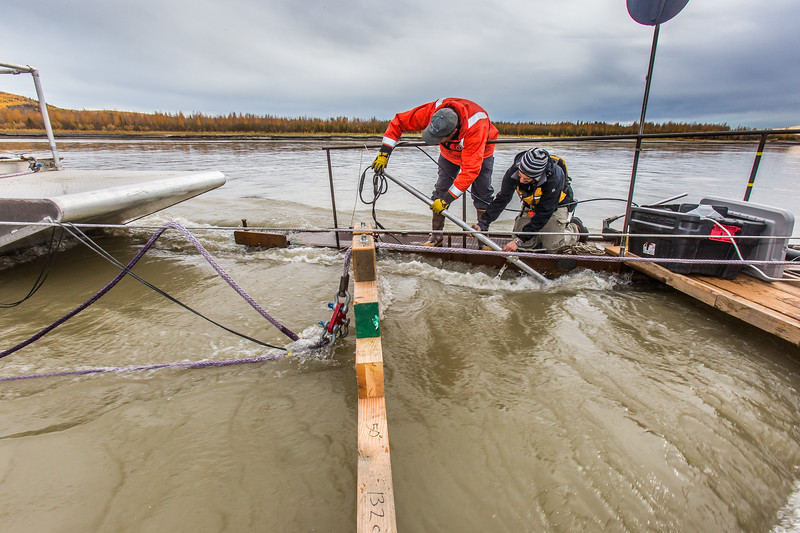 Jeremy Kasper, left, and Paul Duvoy, researchers with UAF's Alaska Center for Energy and Power, install testing components on a floating debris diverter designed to block floating logs and other debris from damaging a hydrokinetic generator attached to a barge behind it. The research is taking place on the Tanana River near Nenana.