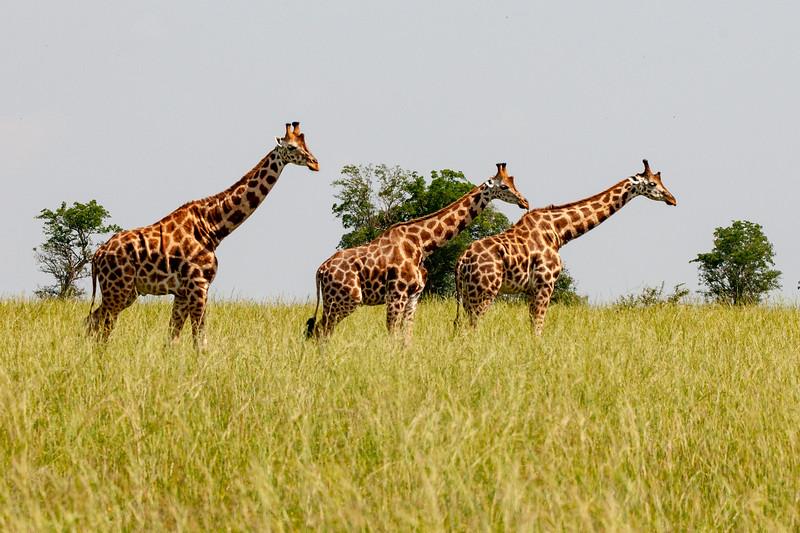 Uganda-48.jpg
