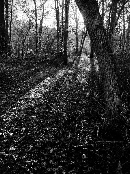 overgrown path emulator.jpg