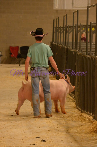 2015 Kerr County Stock Show Weight In