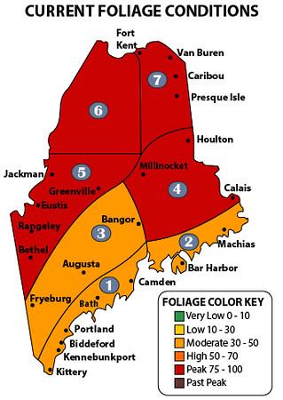 Maine foliage map