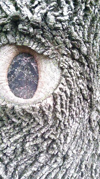 eye-of-tree.jpg