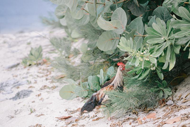 Lush Caribbean Beach Destination Wedding Sandals Royal Bahamian   0034.jpg