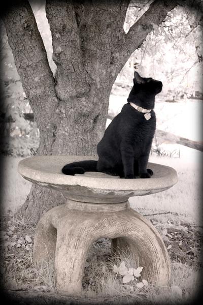 Phoenix on a Pedestal