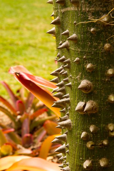 nanaples_botanical_garden_0017-LR.jpg