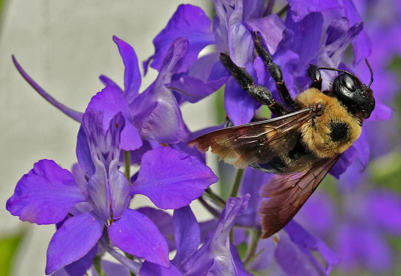 Bumble bee 26