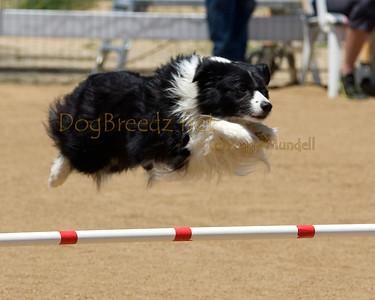 Jumpers Elite Round 1 - 16 inch