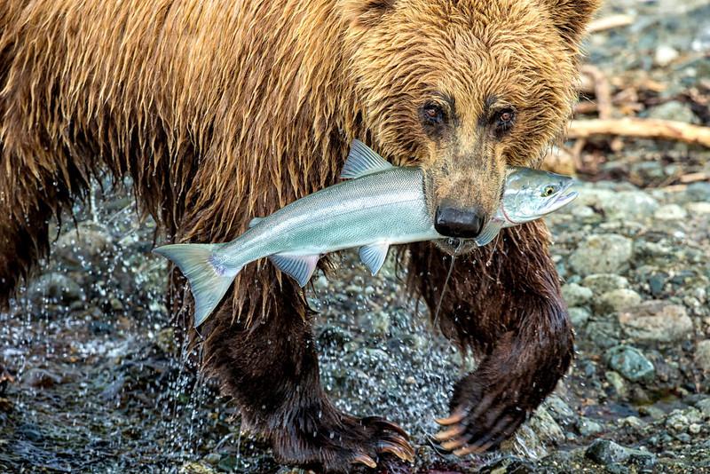 Alaska_2013_FH0T8806.jpg