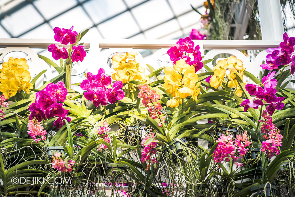 Gardens by the Bay - Orchid Extravaganza 2018 / Balcony