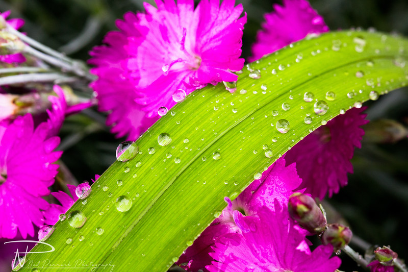 Water Drops in Garden-9.jpg