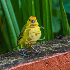 20161224-Birds
