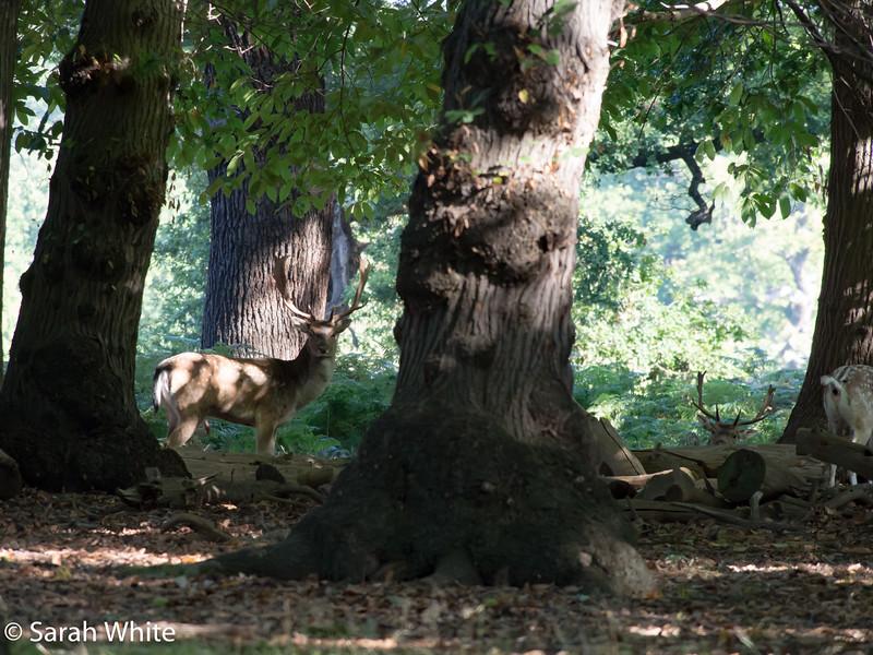 Deer rut_260915_626.jpg