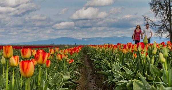 Spring @ WoodenShoe Tulip Festival