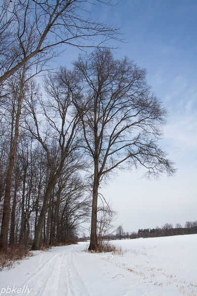 tree 013114-2.jpg